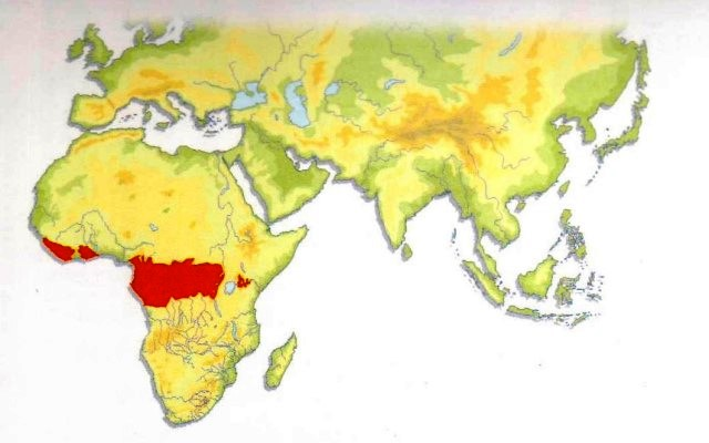 African Golden Cat Distribution Map