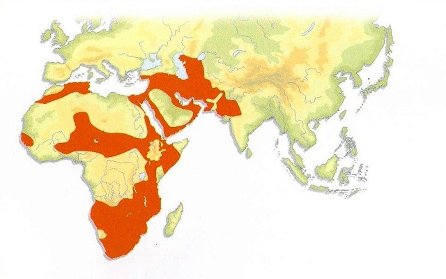 Caracal Distribution Map