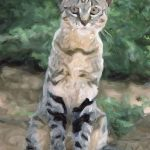 African Wildcat Videos