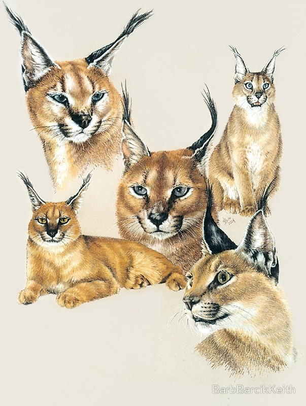 African Caracal Cat Collage