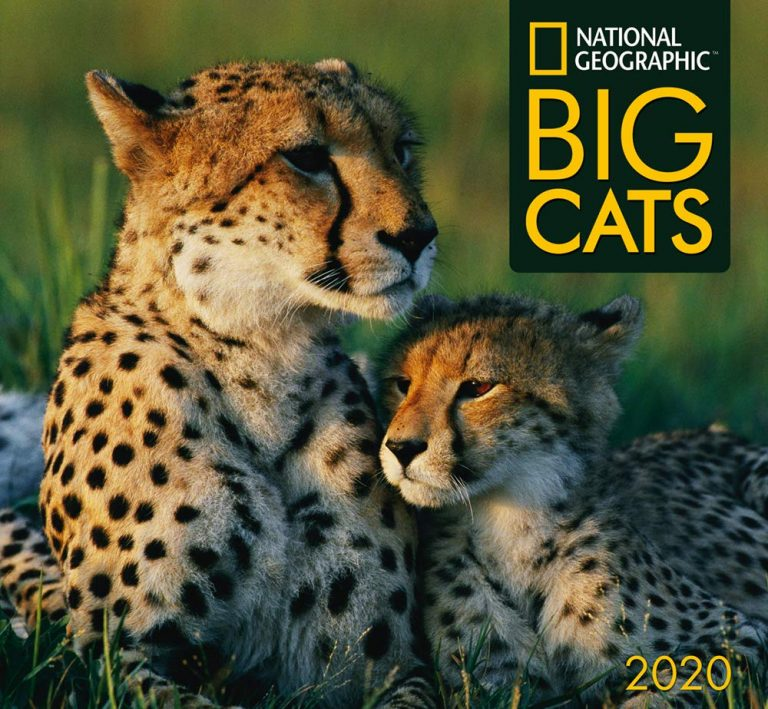 Nat Geo Big Cats Calendar 2020